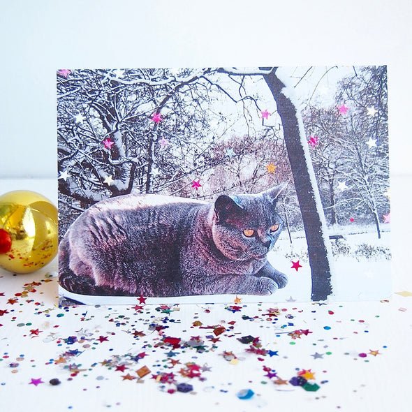 British blue cat with stars card