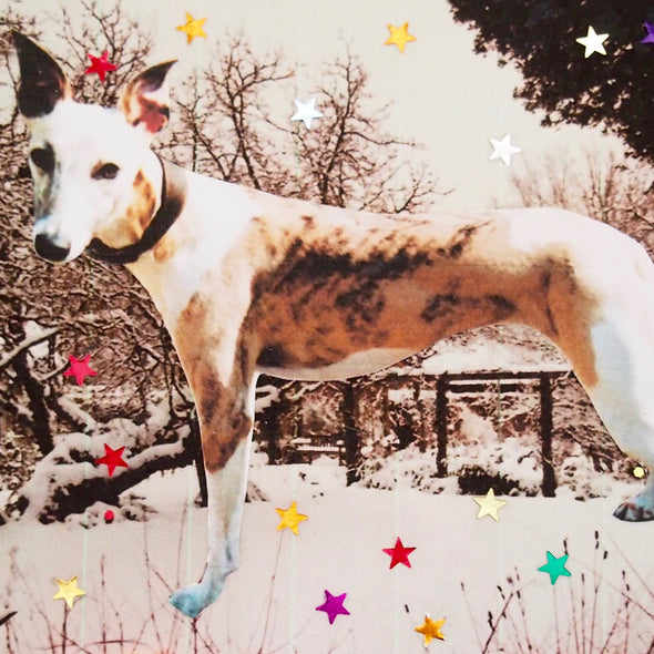 Whippet greyhound dog christmas card