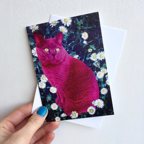 pink  british shorthair cat birthday card