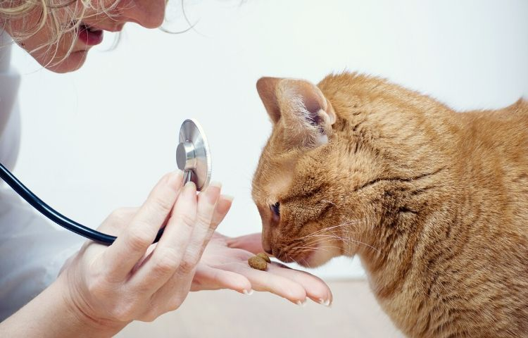 Treating cat allergies