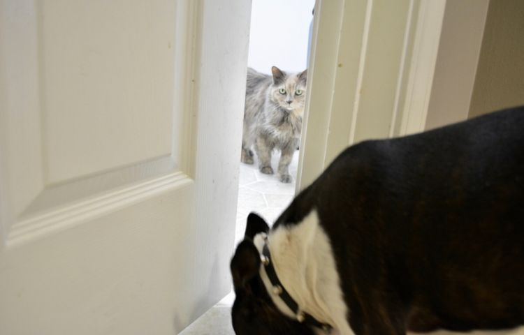 Cat Training with Door Buddy