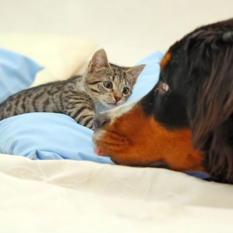 Cat and dog playing or fighting