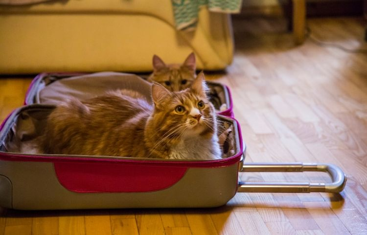How to Travel with Your Cat - blog image