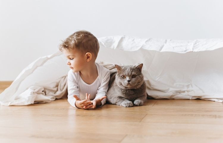 Introducing Cats and Babies - blog image