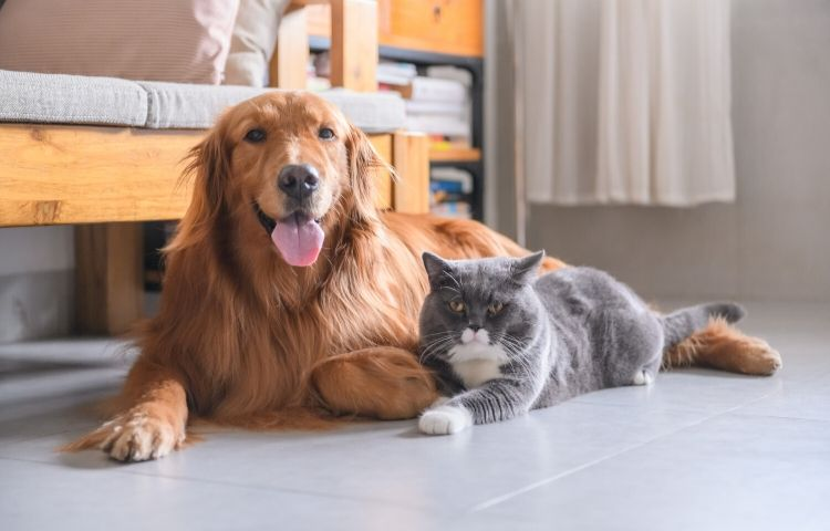 dogs and cats together