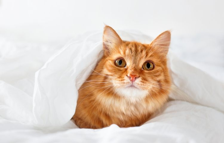 Pet-friendly home - cat in bed