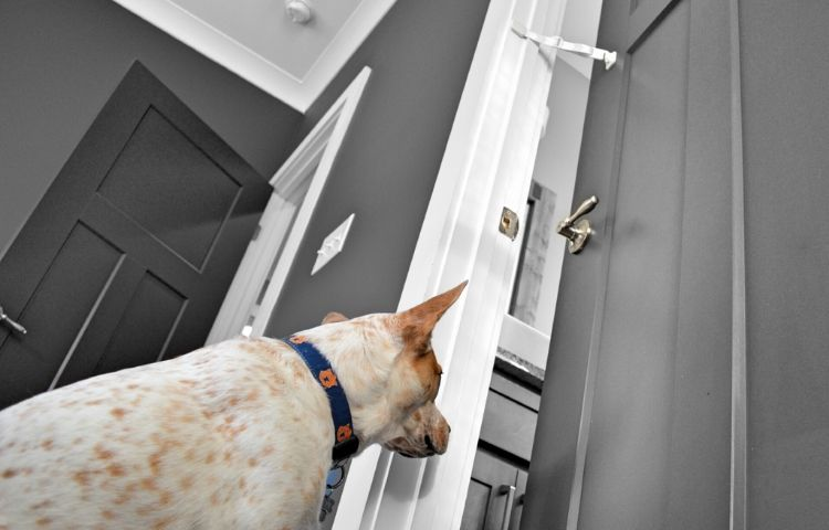 socializing your dog with Door Buddy