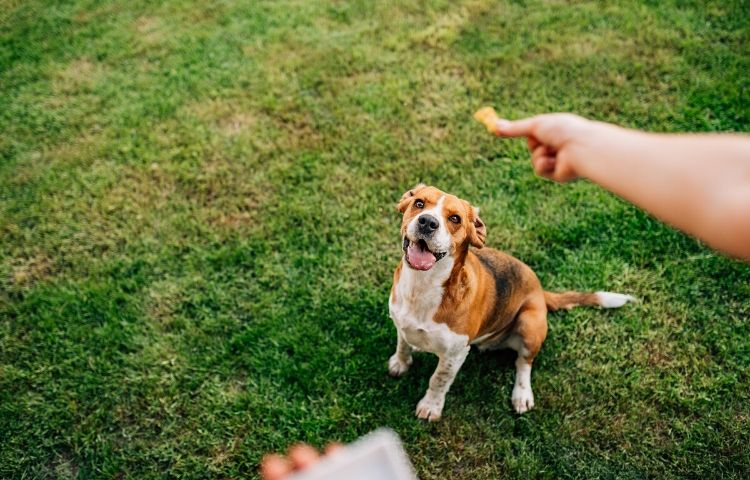 training an abused dog with treats