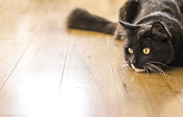 understanding your cat's behavior - hunting