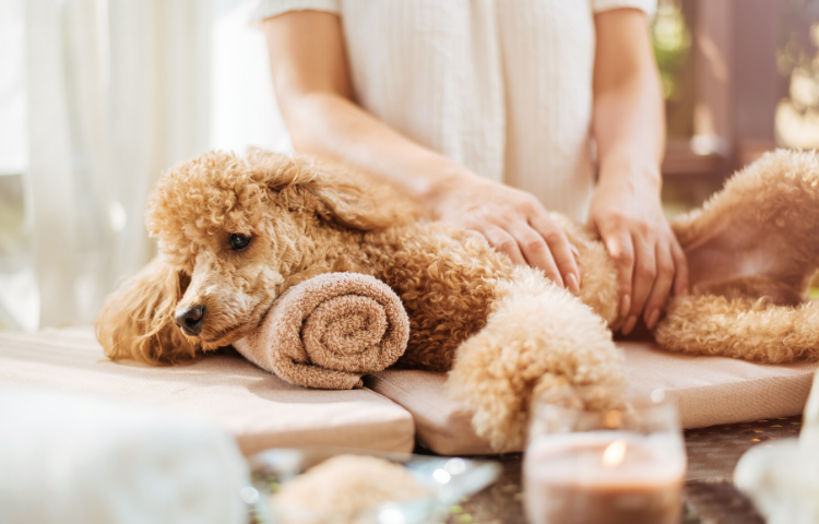 luxury pet products - pet spa