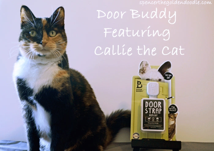 cali the cat covering the door buddy