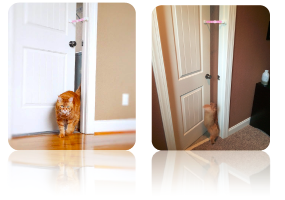 How to keep todder out of litter box but let cats enter easily. The Door Buddy