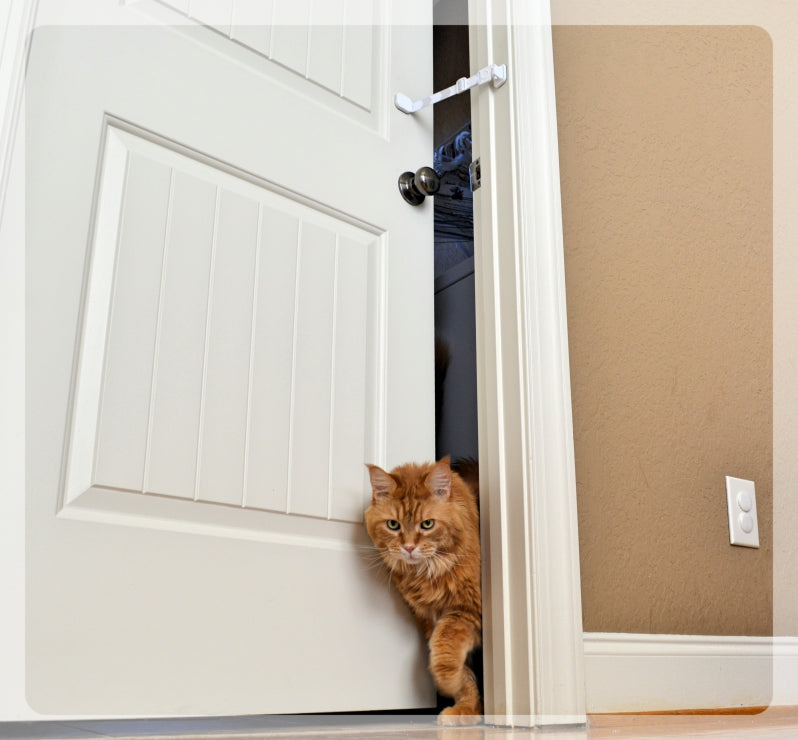 Cat easily exiting room with Door Buddy