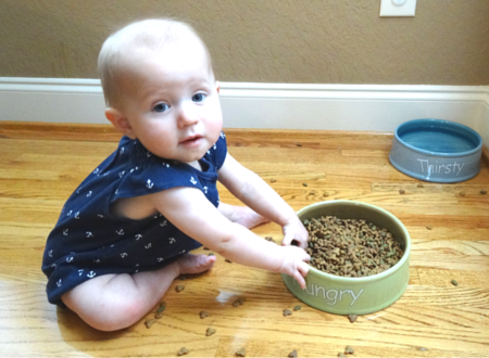 How to keep baby out of cat food and litter box with Door Buddy