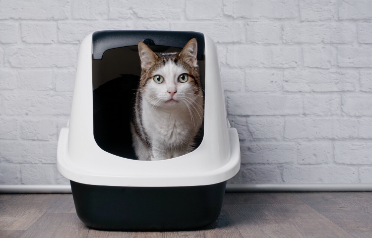 covered cat litter box - keep dog out of litter box