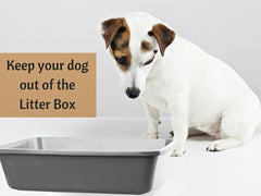 Door Buddy - How to keep dog out of litter box. Amazon #1 New Release