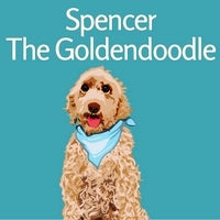 Spencer the Goldendoodle on Door Buddy