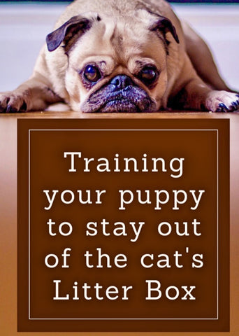 Training your puppy to stay out of the cats litter box