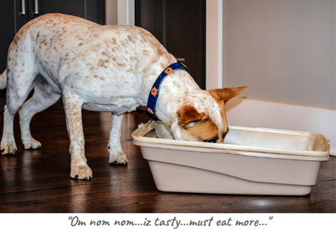 keep dog out of litter box