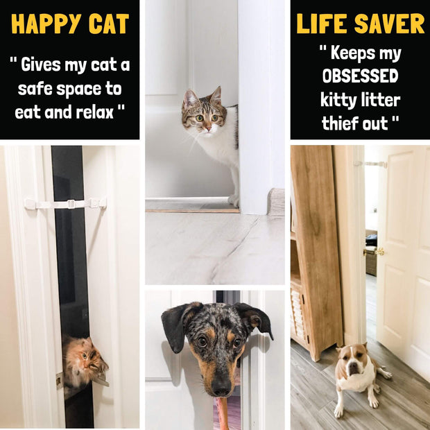 door dog strap to dog proof cat box