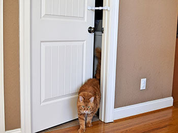hold door open for cat and keep dog out