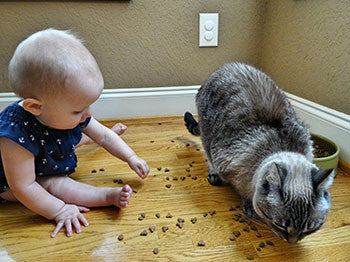 keep baby out of cat food and cat litter