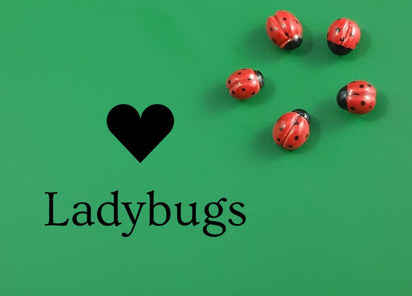 Porcelain ladybugs by Joseph Chiang