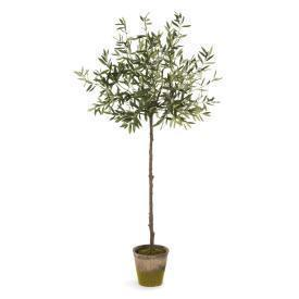 "69"" Olive Tree in a Moss Pot"