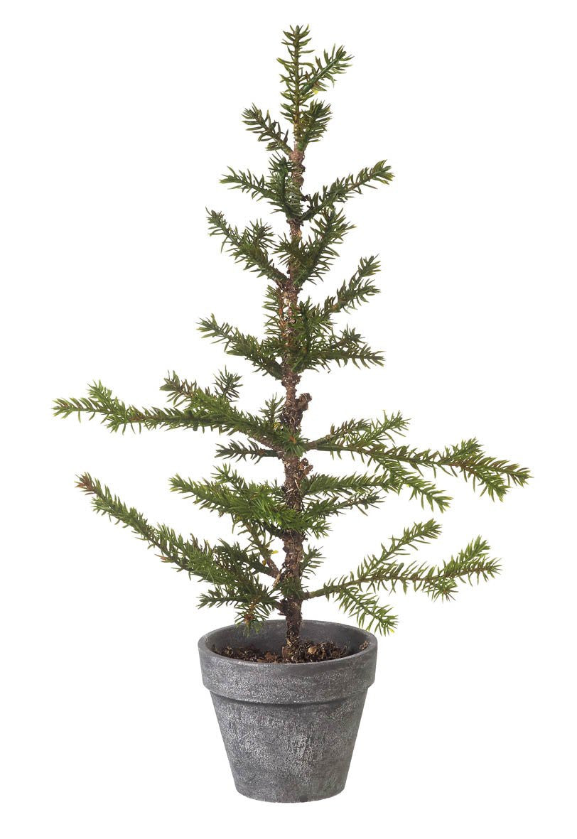 small Christmas tree in a pot