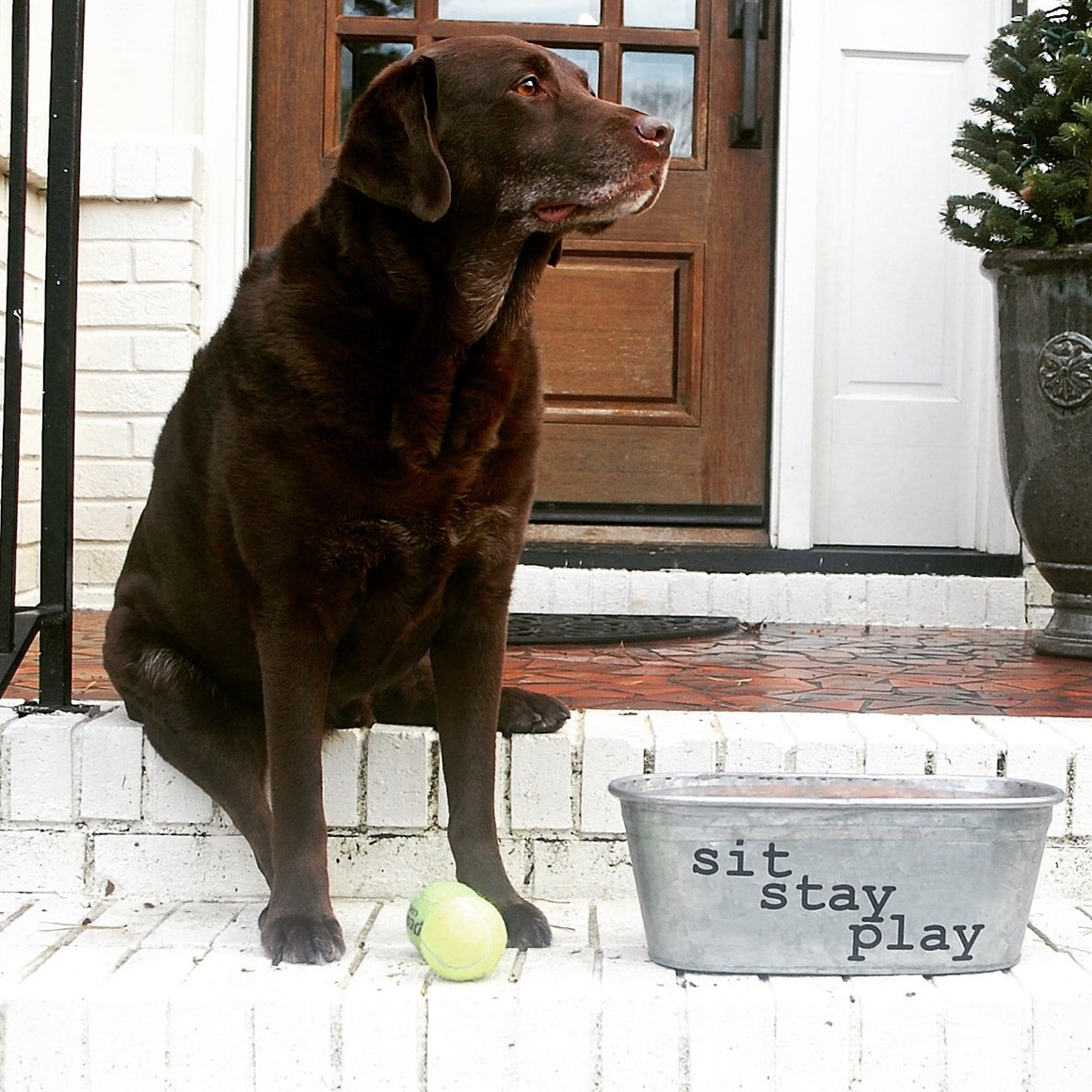 Sit Stay Play Dog Toys Galvanized Tub