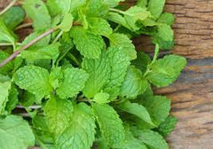 Peppermint - not just a breath of fresh air