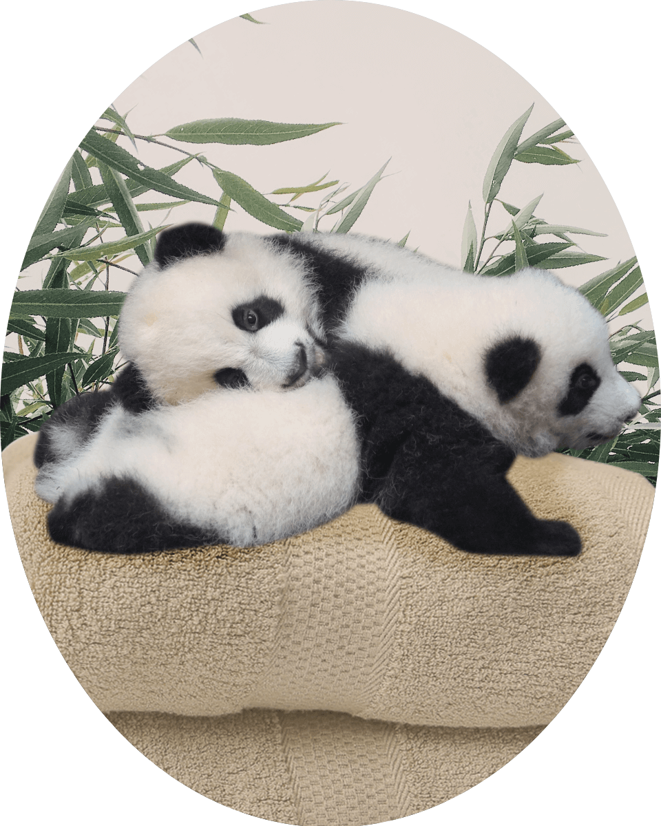 Pandas laying on top of bamboo towels.