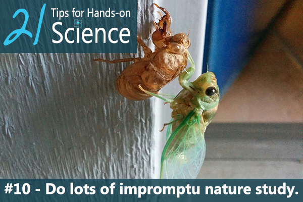 21 Tips for Hands-on Science {Elemental Science} - Tip #10. Do lots of impromptu nature study.