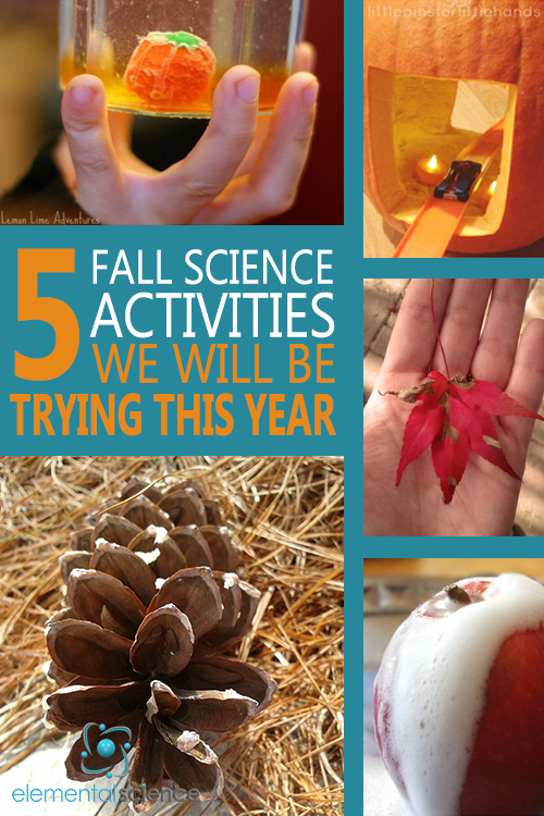 This year for fall science we will be dissolving pumpkin candies, driving through pumpkins, making leaf lanterns, exploding apples, and peeking into pine cones!