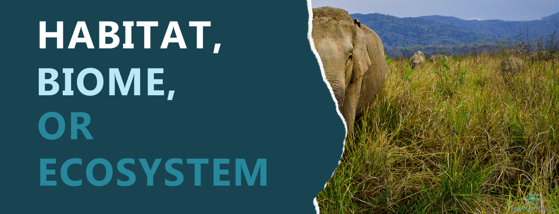 Which one is it - biome, ecosystem, or habitat? The answer, plus a simple STEAM activity