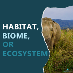 Habitat, Biome, or Ecosystem? All three seem similar, but there are subtle distinctions! Come see what those are and get a simple STEAM activity to use with your students.