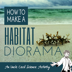 How to Make a Habitat Diorama