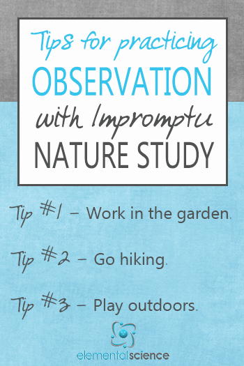 3 tips for practicing observation skills with impromptu nature study