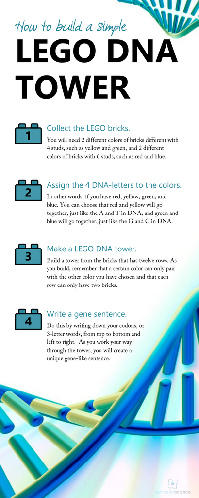 Get the full directions for this simple LEGO DNA tower, plus pictures and an explanation of DNA at Elemental Science.