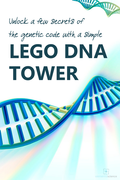 Learn about genetics as you build a simple LEGO DNA tower in this homeschool science activity from Elemental Science.