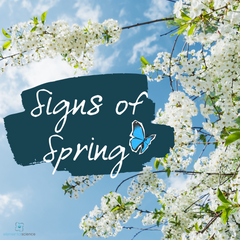 Learn how to can explore and record the signs of spring, including a free journal template from Elemental Science