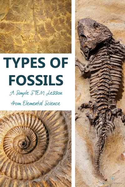 In this simple STEM lesson from Elemental Science, you will find the tools you need to share about the different types of fossils with your students.