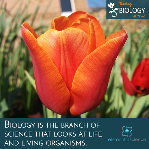 Biology is the branch of science that looks at life and living organisms. Get tips for teaching this subject in your homeschool!