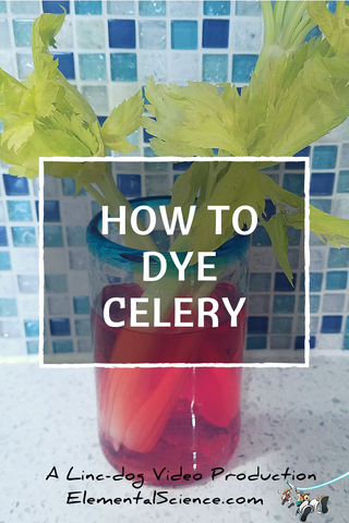 The prairie dog is jealous and so we are sharing his How to Dye Celery video