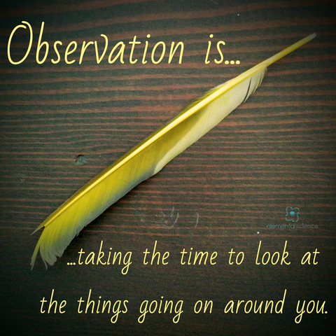 What is observation? And why is it a key skill to teach as part of your homeschool science plan?