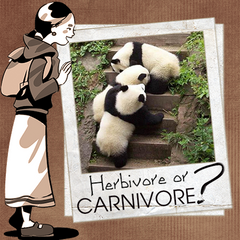 Are giant pandas herbivores or carnivores
