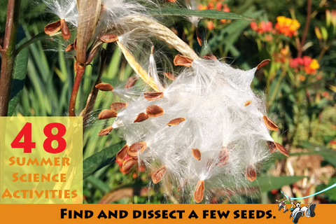 Find and dissect a few seeds.