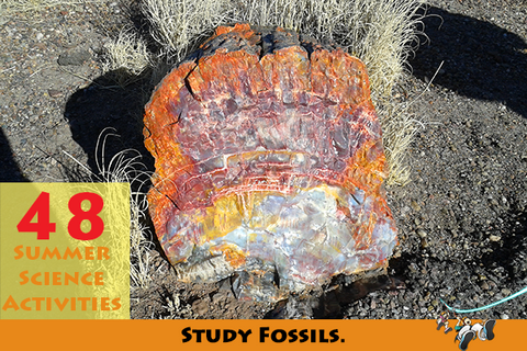 Summer science - Study fossils.