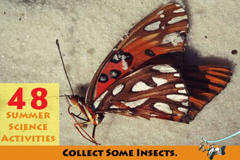 collect some insects