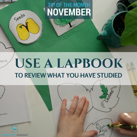 Use a lapbook as part of your homeschool science plan to review what you have studied.